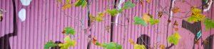 cropped-grafitti-pink.jpg